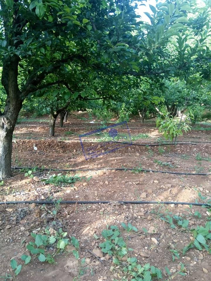 للبيع مزرعة خمس دلمات مزروعة شجر مثمر